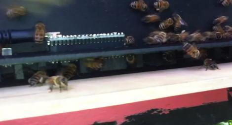 Contando abejas