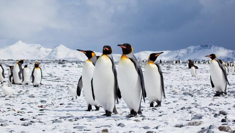 Colección de herramientas de Linux con esteroides